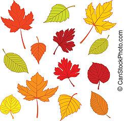 hojas, otoño, blanco