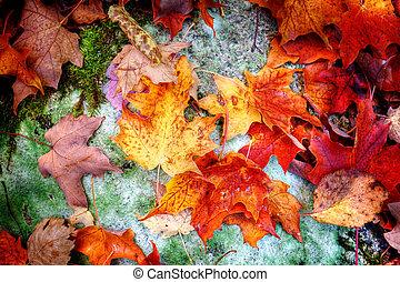 hojas, otoño, bosque, arce, piso
