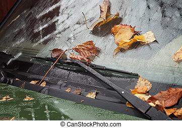 hojas, parabrisas
