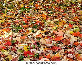 hojas, plano de fondo, otoño