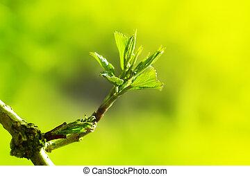 hojas, primavera