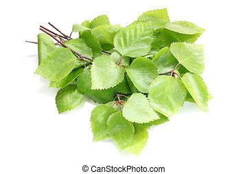 hojas, ramitas, verde, abedul