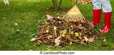 hojas, rastrillo, otoño