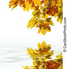 hojas, reflejar, en el agua, enfoque poco profundo