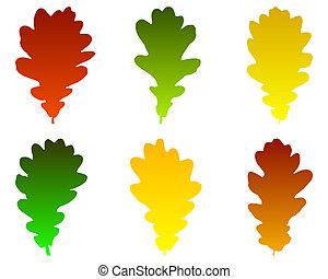 hojas, roble
