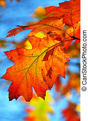 hojas, roble, otoño