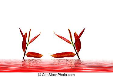 hojas, rojo