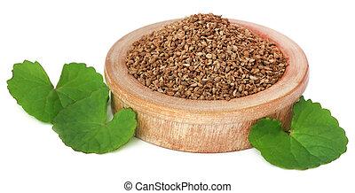 hojas, semillas, ajwain, thankuni