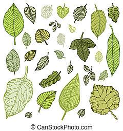 hojas, set., vector, verde, illustration.