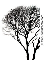 hojas, sin, árbol, siluetas, muerto