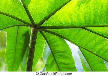 hojas, tiro, verde, ángulo bajo