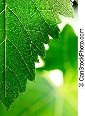 hojas, uva, plano de fondo