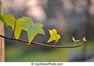 hojas, verde