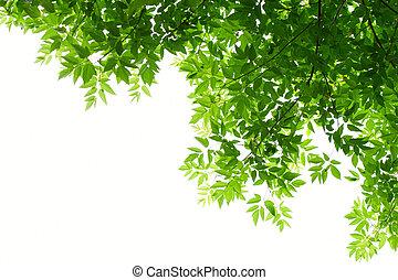 hojas, verde blanco, plano de fondo