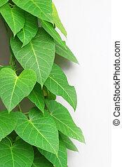 hojas, verde, copyspace