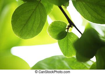 hojas, verde, Plano de fondo