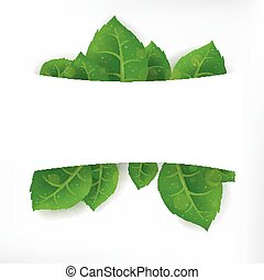 hojas verdes, bandera