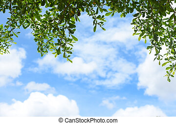 hojas verdes, con, cielo azul, plano de fondo