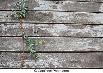 hojas verdes, en, un, de madera, grunge, plano de fondo