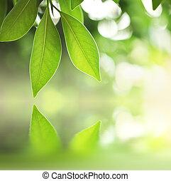 hojas verdes, encima, agua