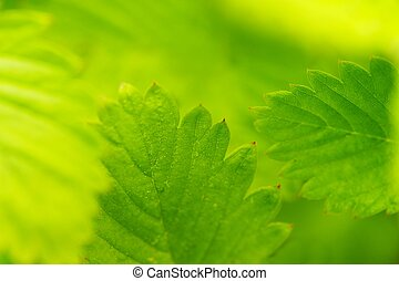 hojas verdes, primer plano