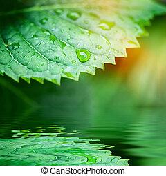 hojas verdes, reflejado adentro, agua, primer plano
