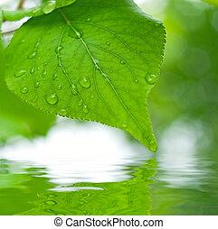 hojas verdes, reflejar, en el agua, enfoque poco profundo