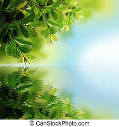 hojas verdes, reflejar, en el agua