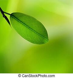 hojas verdes, reflejar, en, el, wate