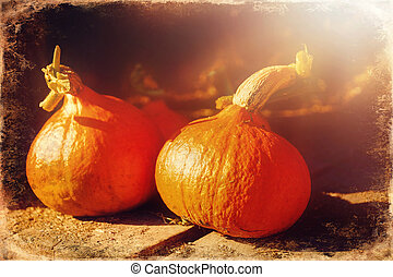 Hokaido pumpkins on a wooden table outdoors, old photo ...