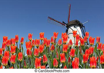 holandés, paisaje, de, molino, y, tulipanes