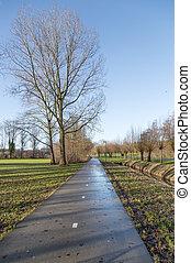 holandês, bicicleta, caminho, em, wintertime, com, árvores nuas