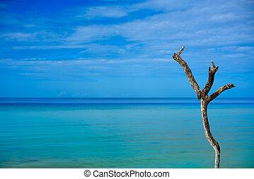 holbox, isla tropical, en, quintana roo, méxico