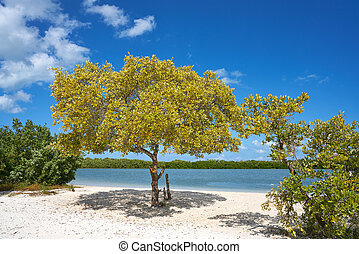 Holbox Island beach mangroove in Quintana Roo of Mexico