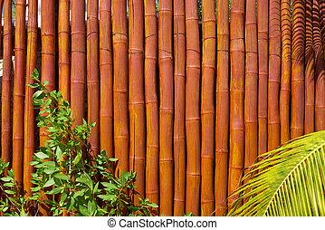 Holbox island cane fence texture