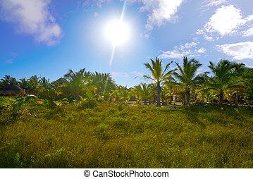 Holbox Island in Quintana Roo Mexico - Holbox Island beach...