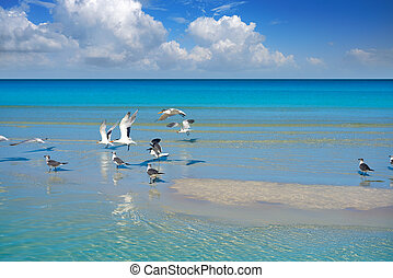 Holbox Island turquoise in Quintana Roo Mexico - Holbox...