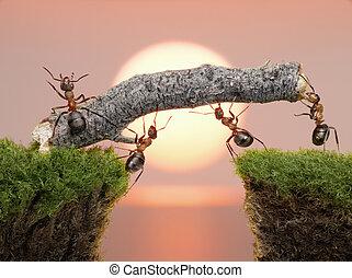 hold, i, myrer, konstruere, bro, hen, vand, på, solopgang