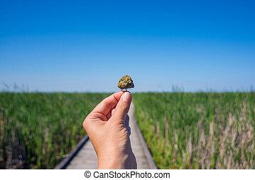 hold ræk, cannabis, bud, agains, trail, og blå, himmel, landskab