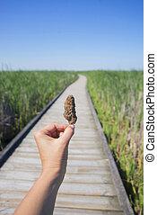 hold ræk, en, cannabis, nug, imod, trail, og blå, himmel, landskab