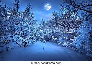 holdfény, erdő, tél, éjszaka
