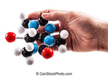 holding a caffeine molecular structure model
