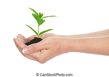 holding a plant between hands on wh