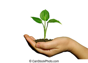 holding a plant between hands on white