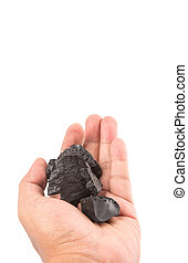 Holding Charcoal