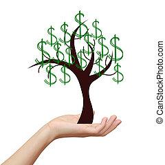 holding donna, soldi, dollari, albero, isolato, mano, fondo, bianco, segno