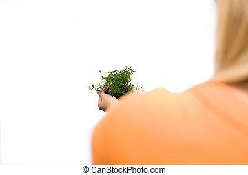 holding donna, uno, pianta