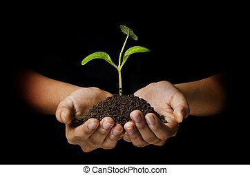 holding donna, verde, giovane pianta