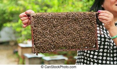 Holding honey beehive bare hand