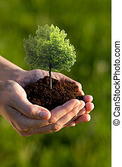 Holding - Hands holding soil with a Linden Tree against a...